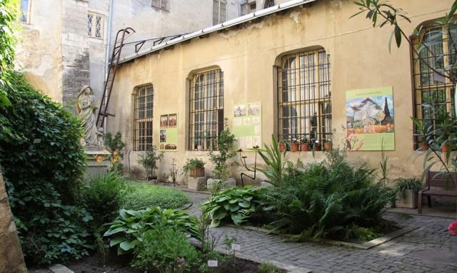 Уперше в Львові відкрили виставку живих біблійних рослин